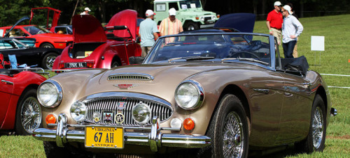 Classics on the Green - Austin Healey