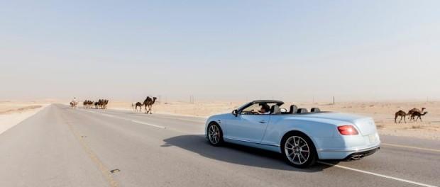 Bentley's Desert Train - Camels