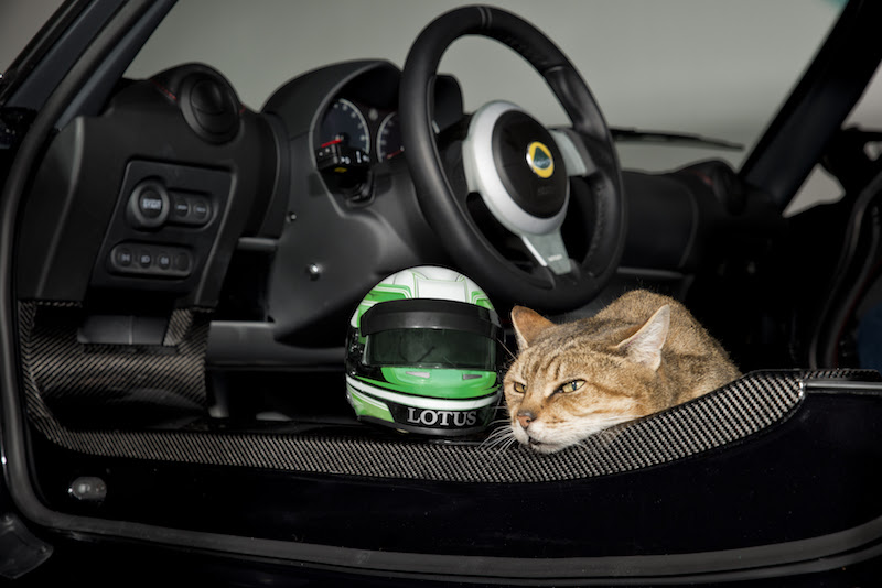 Lotus Lids - Protection for Our Four-Legged Friends 2
