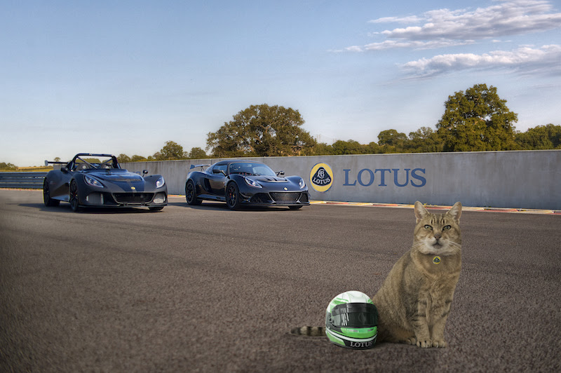 Lotus Lids - Protection for Our Four-Legged Friends