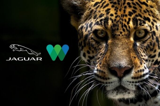 Jaguar North America Teams Up with Wildlife Convservation Society - WCS