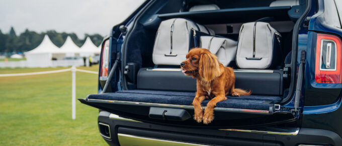 Rolls-Royce Cullinan with dog on tailgate