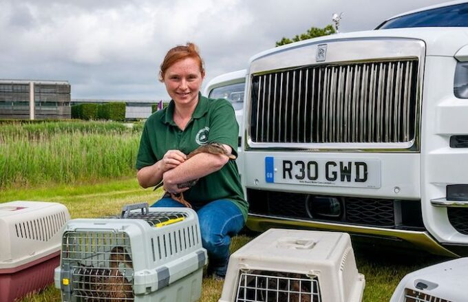 Duck Rescue - Rolls-Royce to the Rescue in Goodwood Ducks Drama